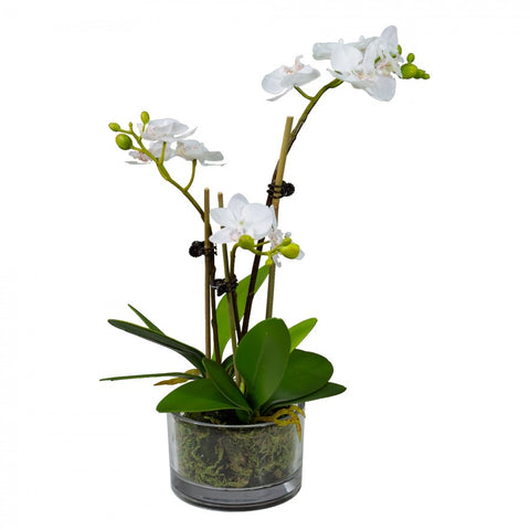 Small White Orchid Set In Glass Bowl