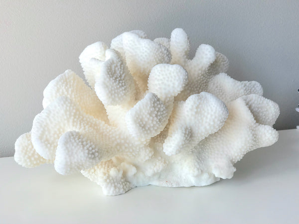 Large Specialty Cauliflower Coral