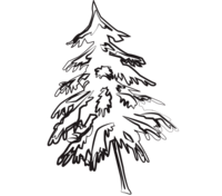 pine tree picture for wood skis