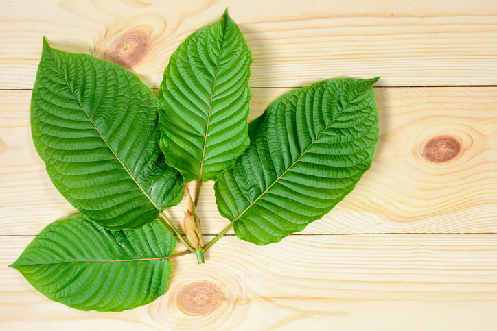 Buy Kratom Extracts Red Vein Kratom Strain Spotlight