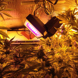 California Lightworks SolarFlare 220W LED Grow Light, Spectral Blend: BloomBooster