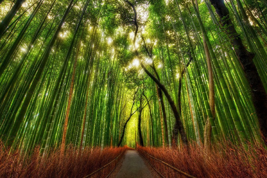Bamboo Forest by Trey Ratcliff on Silk Canvas - UnframedWall Art Painting & Calligraphy,  - Things to Zen About