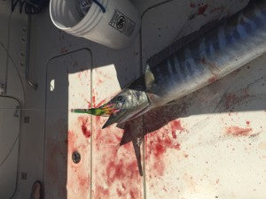 High Speed Wahoo Lure
