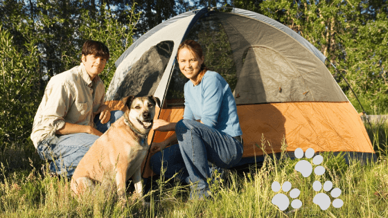Carry on Camping with your canine