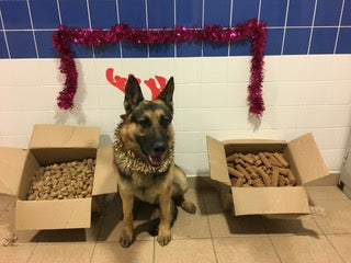 Christmas Treats for our Local Service Dogs