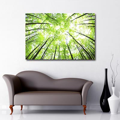 Tree Canopy In the Sun Art Canvas