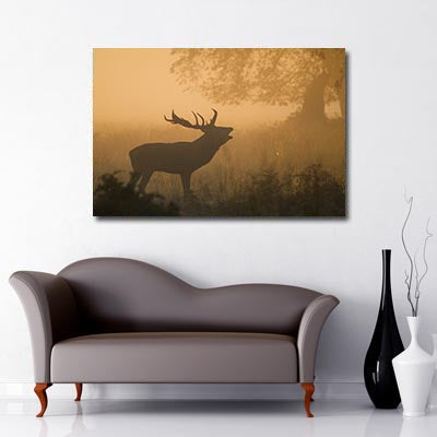Stag at Sunrise, Art Canvas, Stag, Woodland,