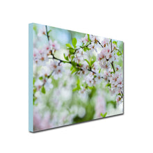 Landscape Canvas of Apple tree branch with pale pink apple blossoms