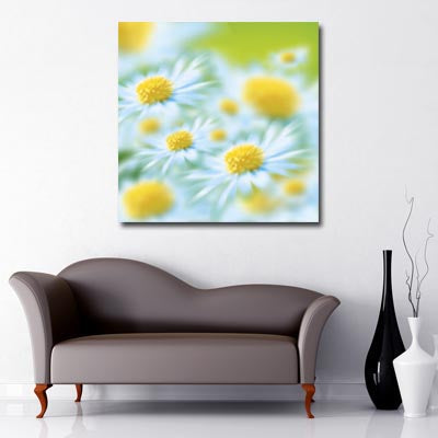 Square Canvas Art of close up of white daisy with yellow centre