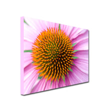 Load image into Gallery viewer, Landscape Art Canvas. Closeup of pink Gerbera flower
