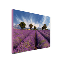 Load image into Gallery viewer, Landscape Art Canvas of Lavender fields with trees in background and cloudy, blue skies