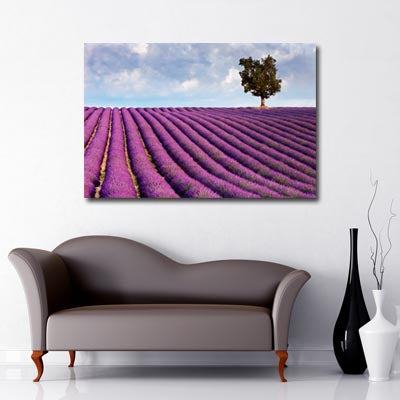 Landscape Art Canvas of Lavender fields with lone tree in background and cloudy, blue skies