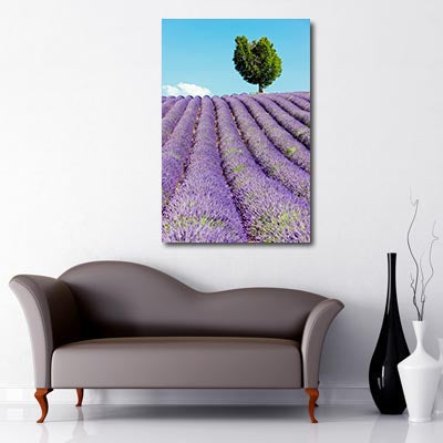 Portrait Art Canvas of Lavender field with blue sky and lone tree in the background