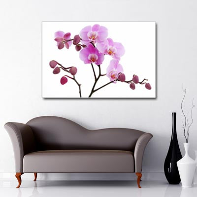 Lilac orchid branches with flowers and buds on white background