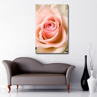 Portrait Art Canvas of close up of open peach rose petals