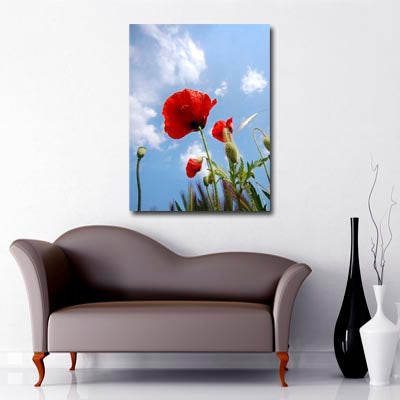 Portrait Art Canvas of Red Poppy in Field with blue sky with interspersed clouds in background