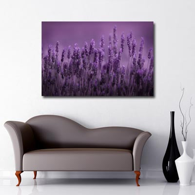 Landscape Art Canvas of close up purple lavender flowers with purple background