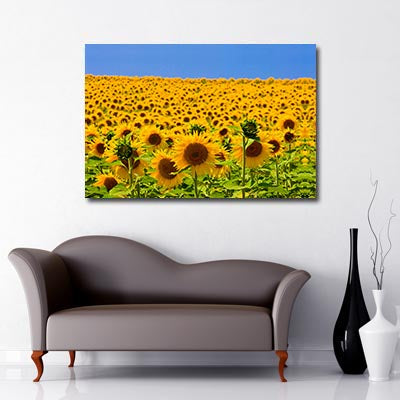 Landscape Art Canvas of Field of Yellow Sunflowers with blue sky background
