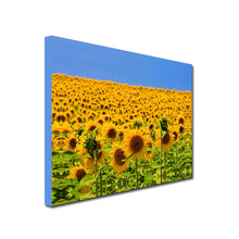 Load image into Gallery viewer, Landscape Art Canvas of Field of Yellow Sunflowers with blue sky background