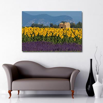 Landscape Art Canvas of Field of Yellow Sunflowers and Lavender with blue sky, hills, trees and building ruins in background