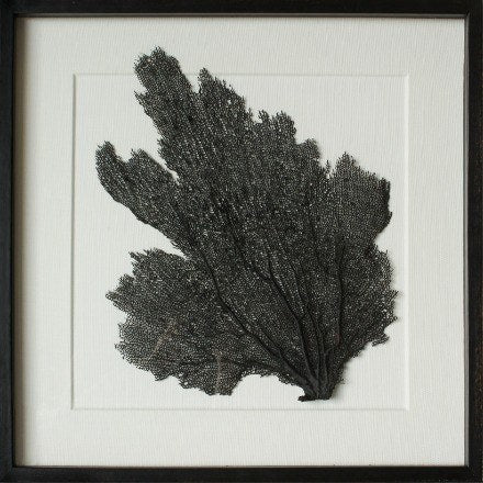 "24 x 24"" Classic Sea Fan on Embossed White Linen - WJC Design"