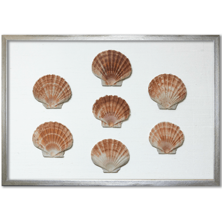 Flat Scallop Shells on White Silk - WJC Design