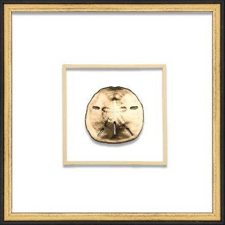 Gold Sand Dollar - WJC Design