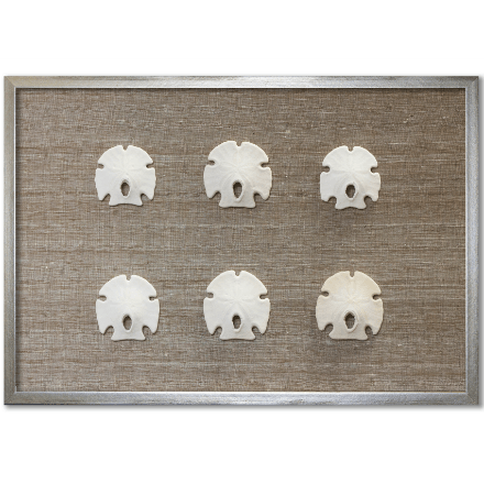 Keyhole Sand Dollars on Brown - WJC Design