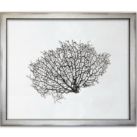 Natural Sea Fan on White - WJC Design