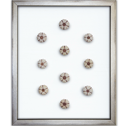 Sea Urchins on White - WJC Design