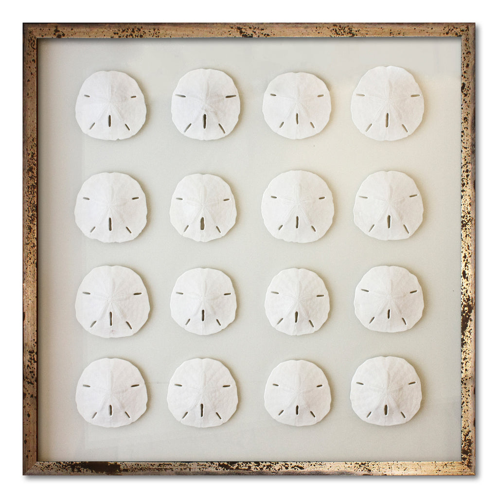 16 Florida Sand Dollars - WJC Design