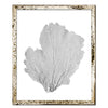 "15 x 18"" Classic Sea Fan - WJC Design"
