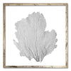 "30 x 30"" Classic Sea Fan - WJC Design"