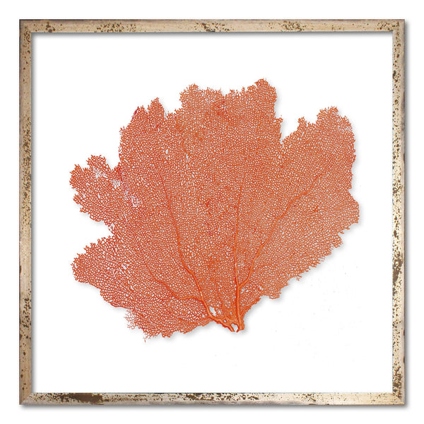"20 x 20"" Classic Sea Fan - WJC Design"