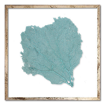 "24 x 24"" Classic Sea Fan - WJC Design"