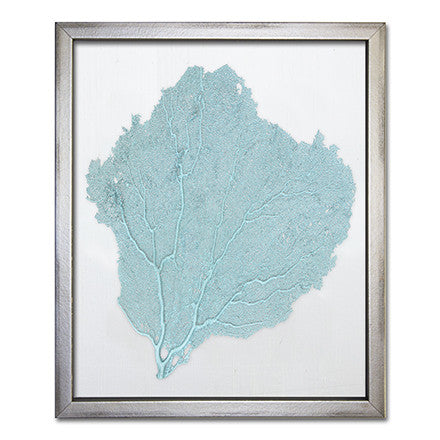 Teal Sea Fan on White - WJC Design