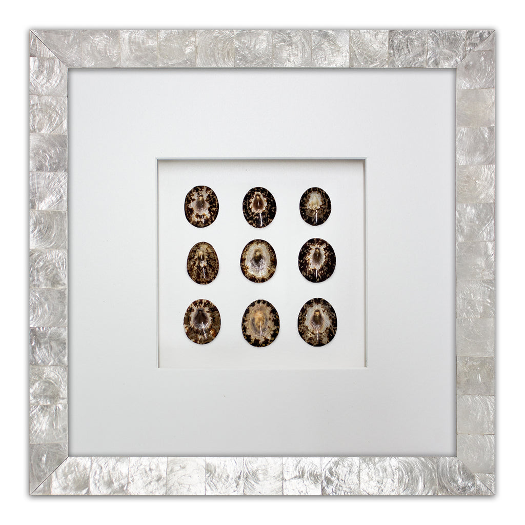 Brown Limpet Shells - WJC Design