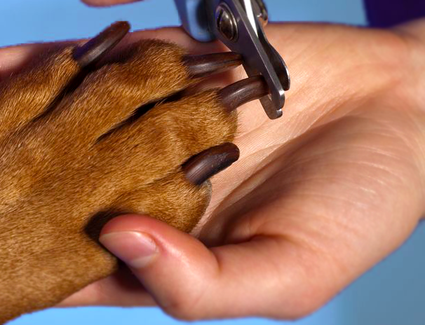 How To Cut Your Dog's Nail - Steps And Tips To The Perfect Dog Nail Cut