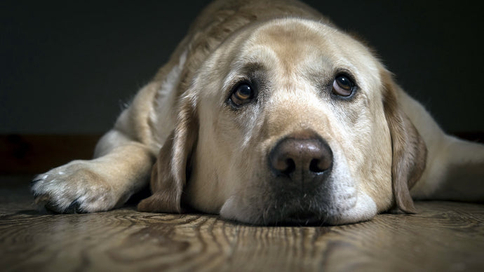 Are you Taking your Dog for Granted?