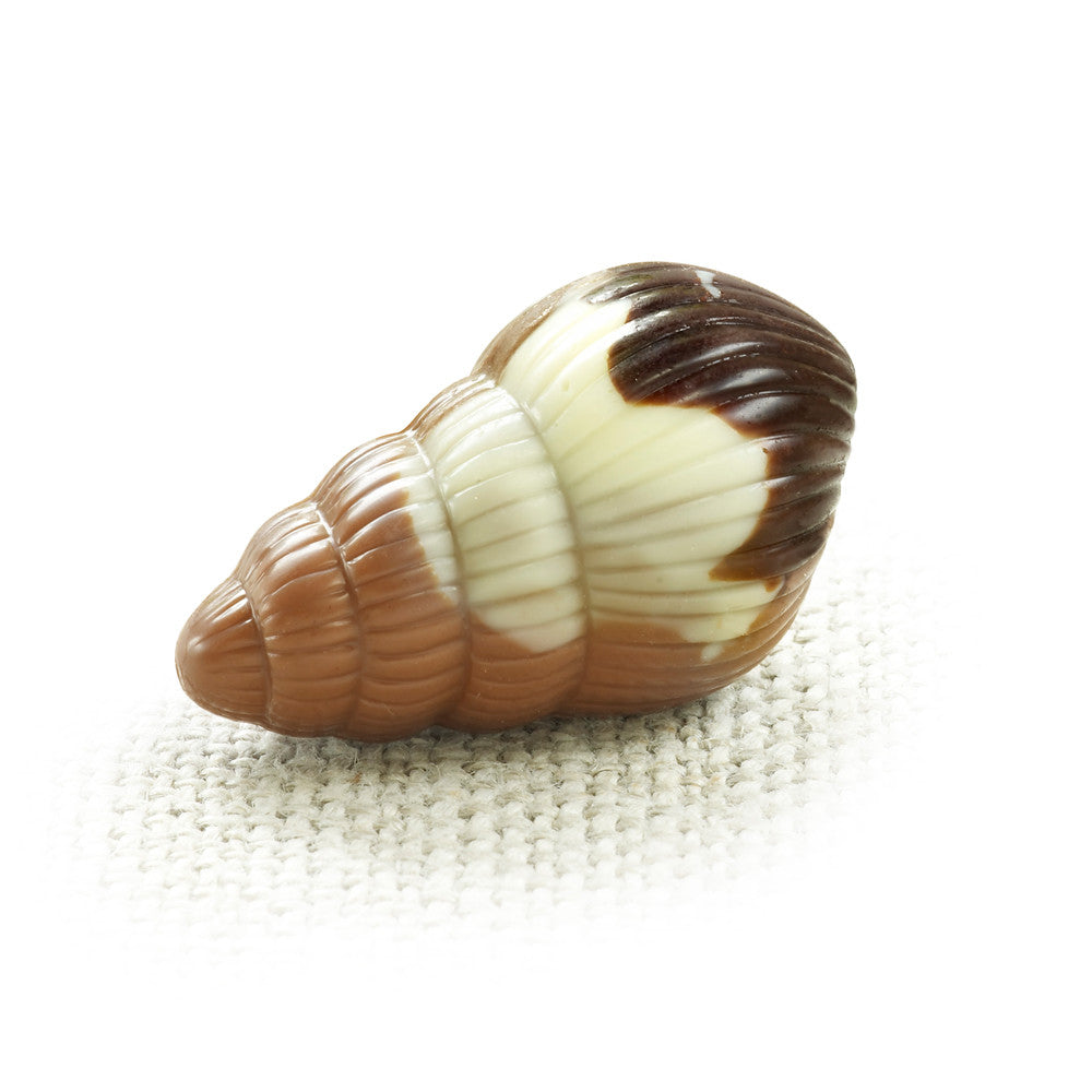 Nautilus Belgian Chocolate Seashells - Whelk