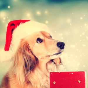 5 Most Luxurious Christmas Gifts for Dogs