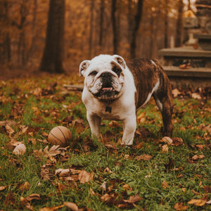 5 Ways to Keep Your Pet Healthy This Fall