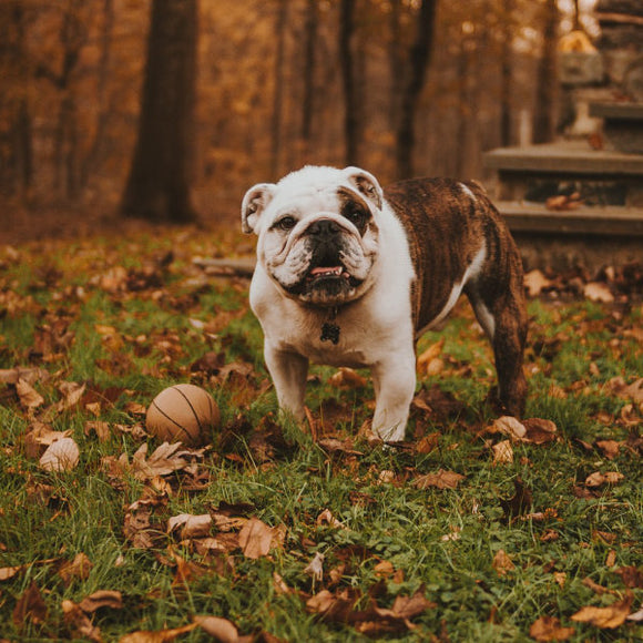 Keep your pet healthy this fall