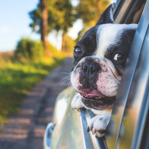 6 Budget-Friendly Ways to Travel With Your Dog