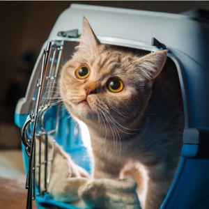 Pet Carriers: How to Choose the Right Size For Your Pet