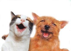 Life's Abundance pet foods, treats and pet care products for dogs and cats.