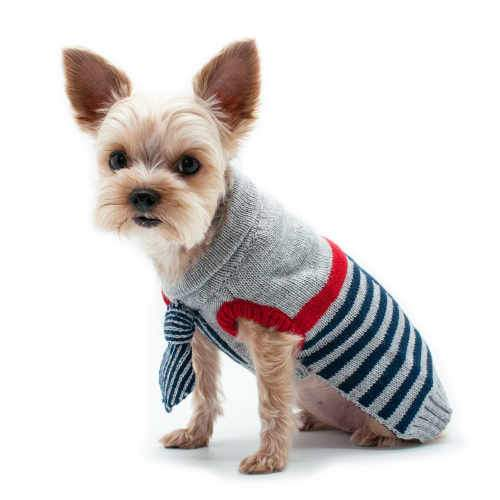 Preppy Dog Sweater with Neck Tie model dog