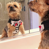 Dog Tuxedo Harness with 3 Bow Ties small