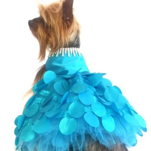 Dreamy turquoise dog dress model.