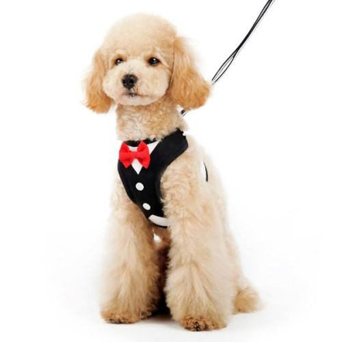 Formal Tuxedo Dog Harness with Bow Tie model dog